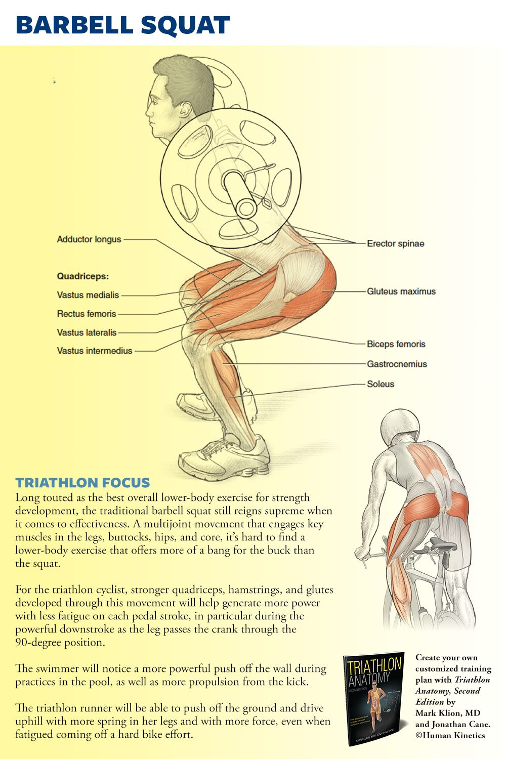 Barbell squat for powerful quads, hamstrings, & glutes in