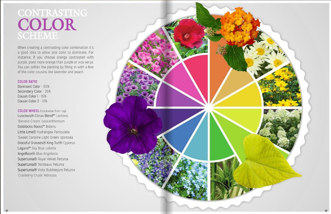 Contrasting color scheme in the flower garden with