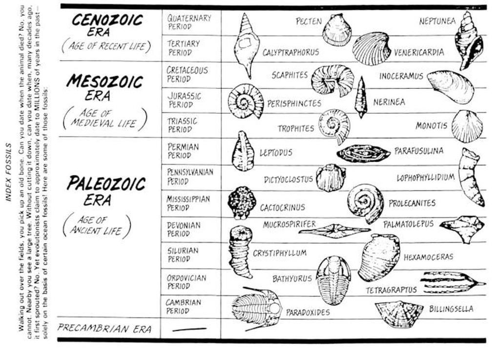 Geological Time Scale, with New Zealand fossils, modified