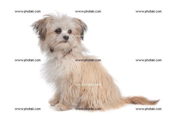 http://www.photaki.com/picture-mixed-breed-mutt_1121120.htm