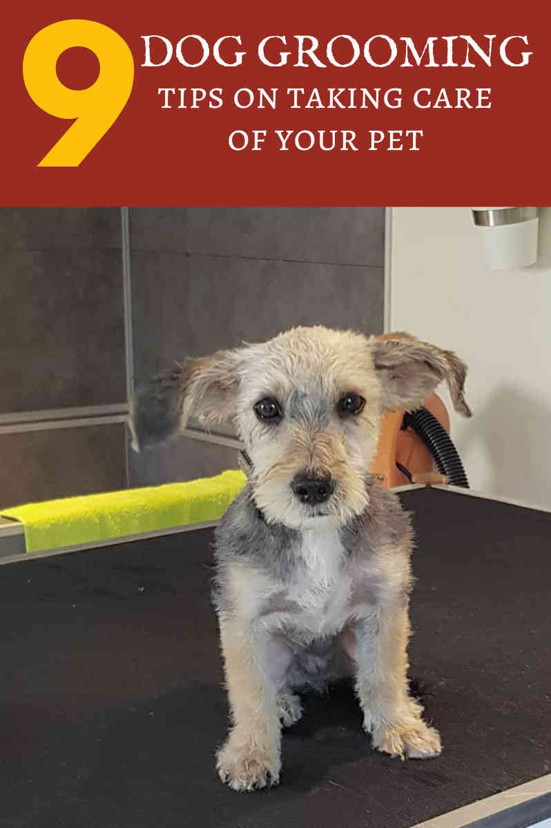 Learning How To Groom A Dog Online And Easy Dog Grooming Tips Dogs Online Dog Grooming