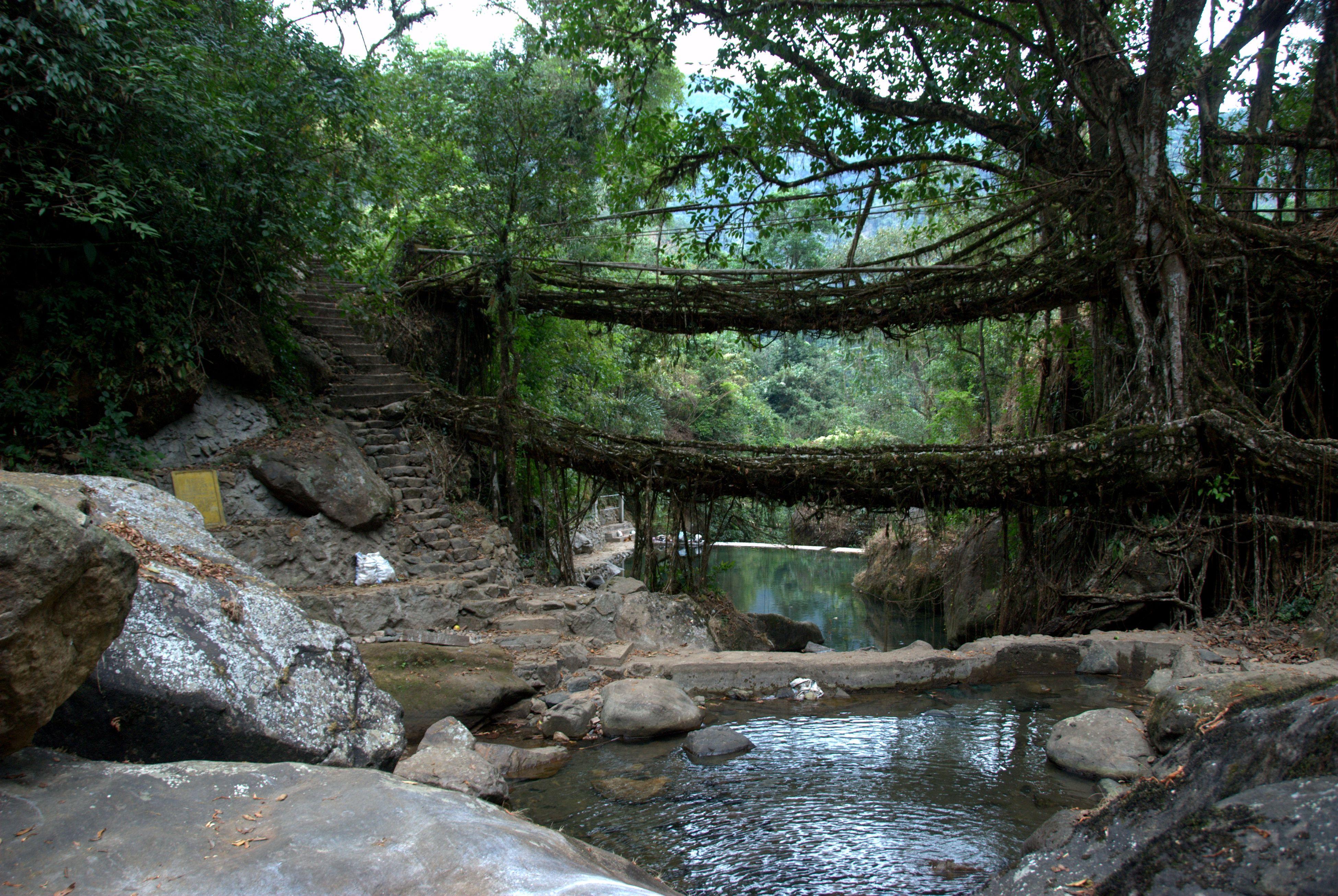 living bridge meghalaya | A double decker living bridge in Meghalaya,