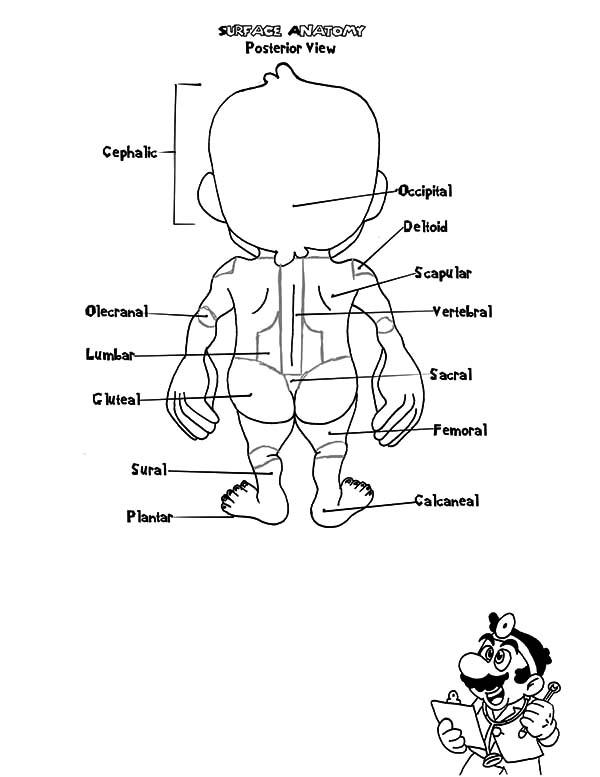 Doctor Mario Anatomi Coloring Pages : Bulk Color