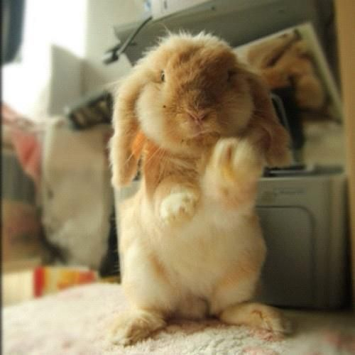 A plush bunny....looks like a toy...but it's not...hop, hop, hop....