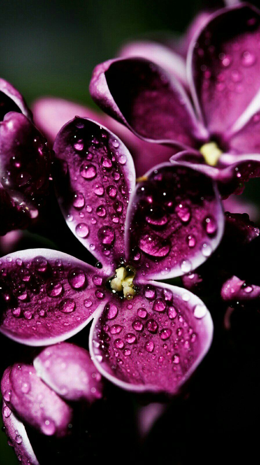 Pin by Benny Kurniawan on Painting flower Flower