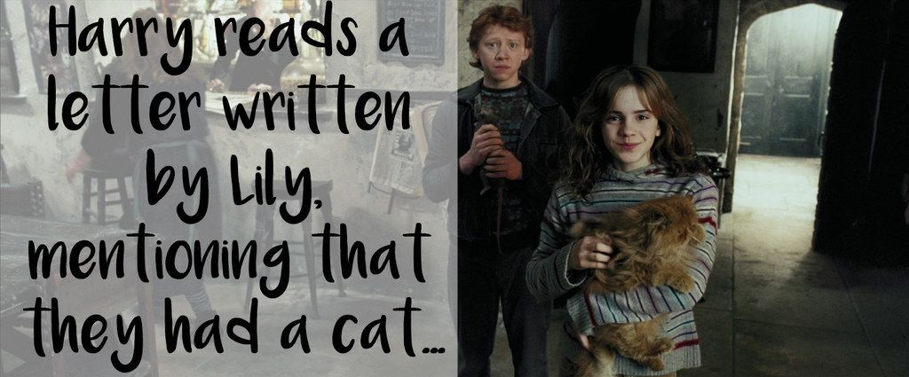 This theory that Hermione's cat, Crookshanks, used to