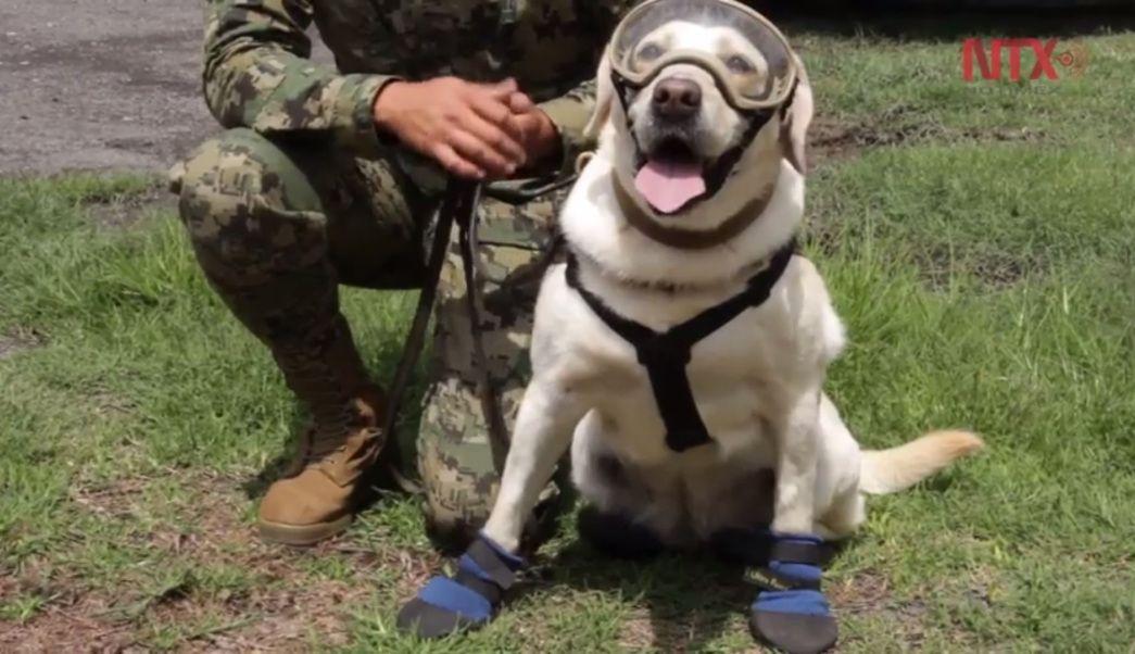 Pin on Puppy Love & Animal Cuties
