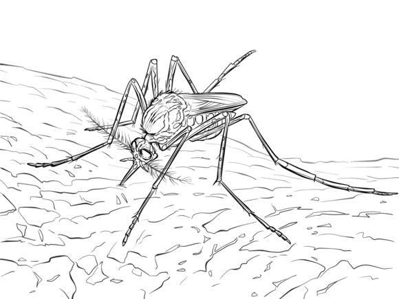 Yellow Fever Mosquito Yellow Fever Coloring Pages Free Printable Coloring Pages