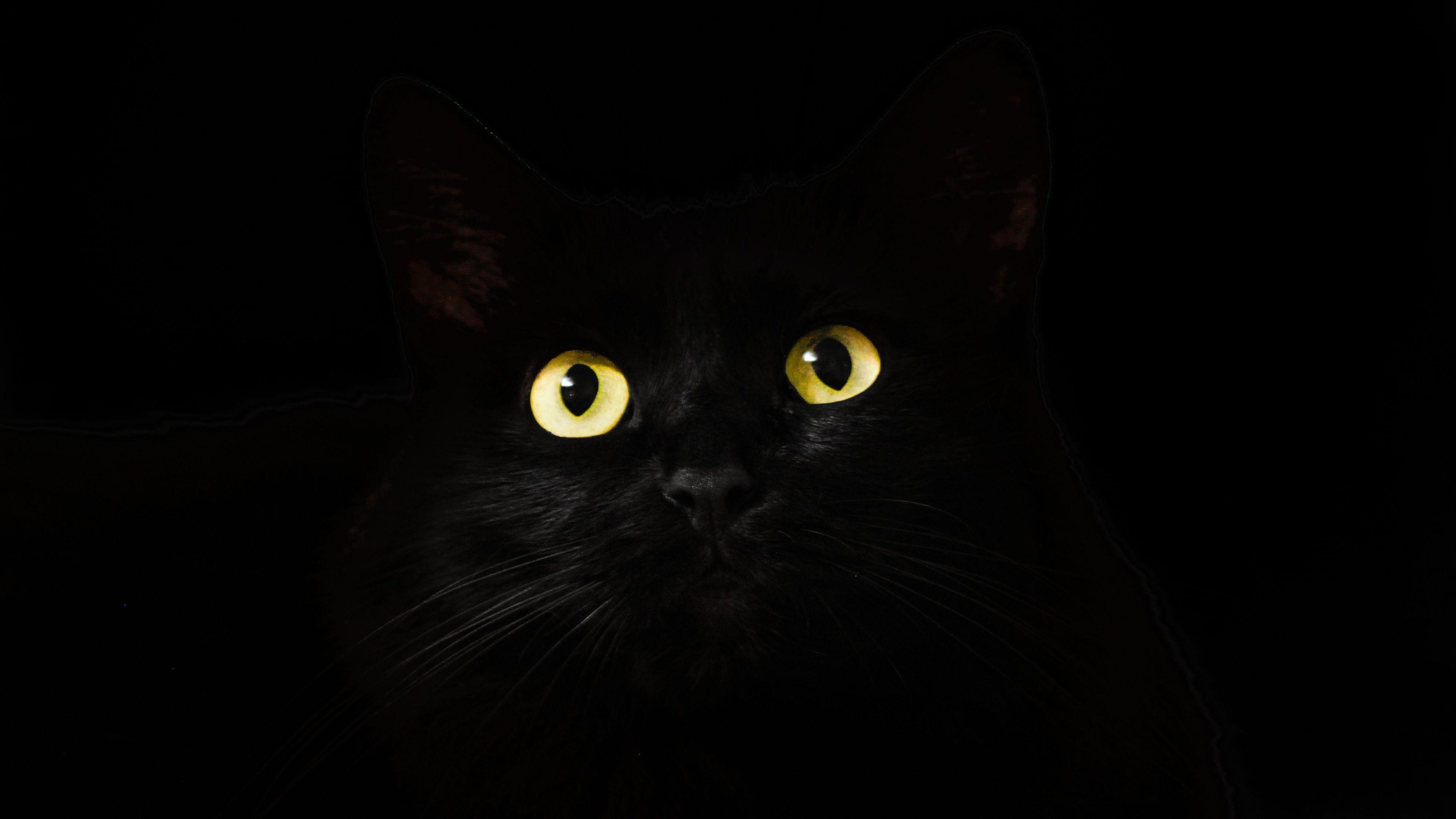 Black Cat Eyes Dark 4k Hd Wallpapers Eyes Wallpapers Cat Wallpapers Animals Wallpapers 4k Wallpapers Cat Pics Cat Wallpaper Cats And Kittens
