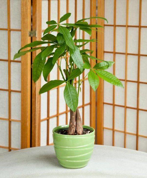 Feng Shui Pflanzen Asiatischer Stil Wohnideen | Zimmerpflanzen ... Zimmerpflanzen Wohnideen