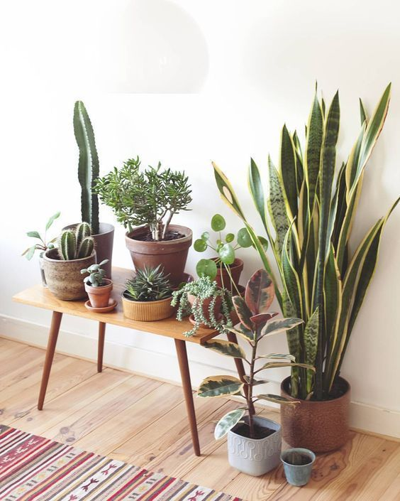 indoor decorative plants to bring freshness; indoor plants decor living room; indoor plants decor ideas; home decoration with indoor plants zone #indoorgardening