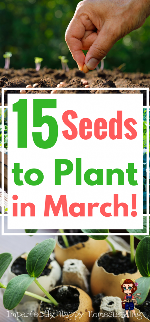 15 Vegetable Seeds You Should Plant In March With Images