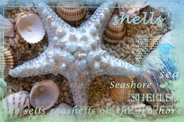Seashells by Gillian Singleton