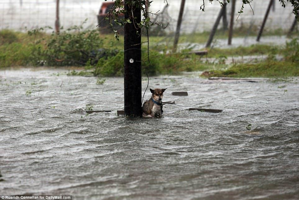 Poor dog abandoned in Texas as flood waters rise Poor