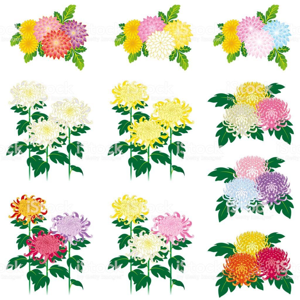 Icons Free Vector Art Vector Art Chrysanthemum Flower