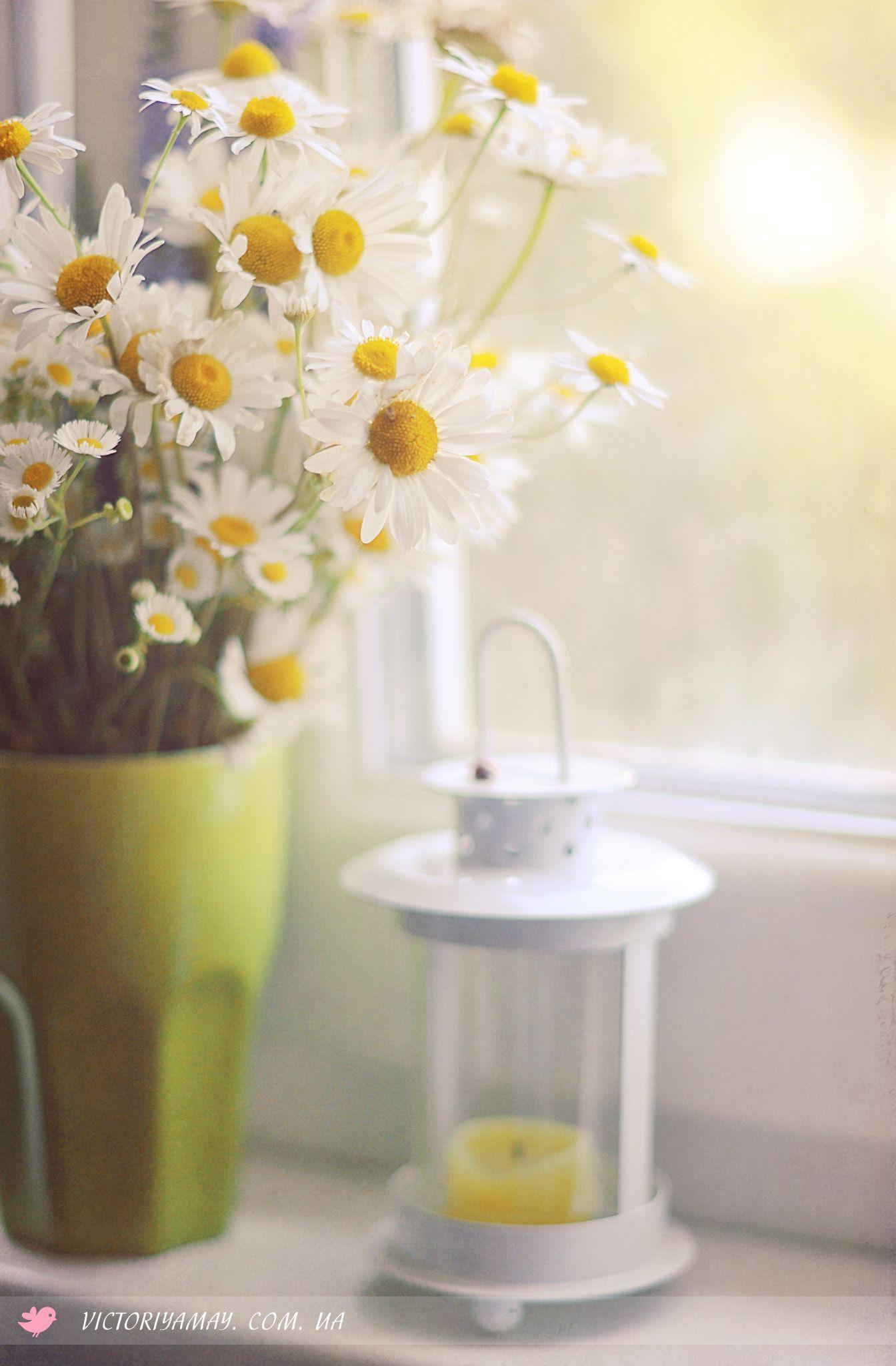 букет ромашек в вазе фото дизайнерские