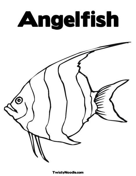 Angelfish Animal Coloring Pages Angel Fish Ocean Coloring Pages