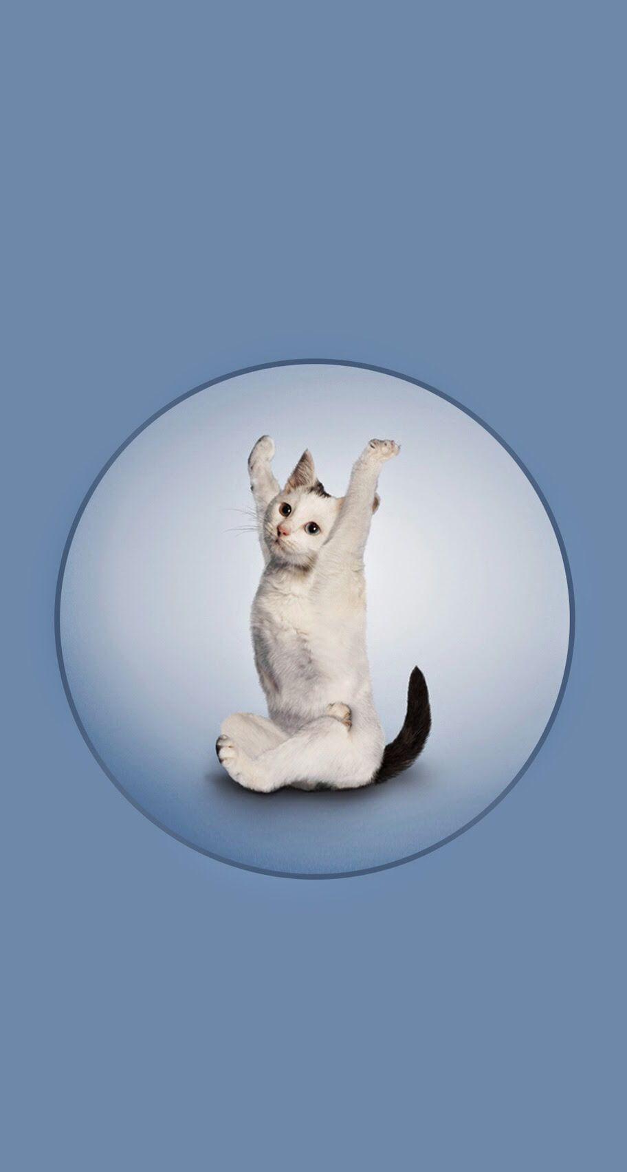 Cat Yoga Cute Bombs Pinterest Cat