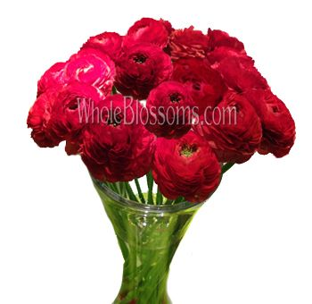 Ranunculus Red Flower For Wholesale Red Wedding Flowers Ranunculus Flowers Red Flowers