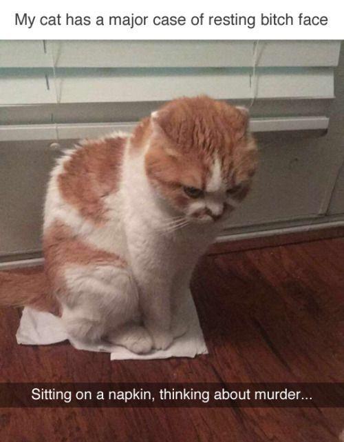 Auf einer Serviette sitzen und über Mord nachdenken … – Animal Blog