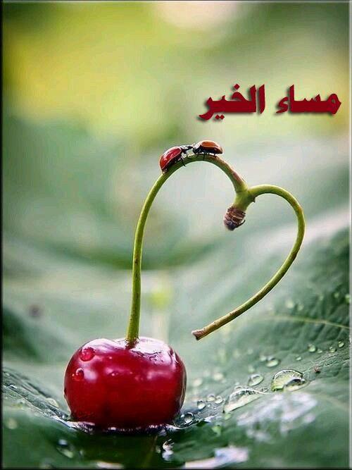 مساء النور والسرور Heart In Nature Ladybug Heart