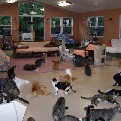 A Shelter In Pa That Allows Adoptable Cats To Be In A Home Like