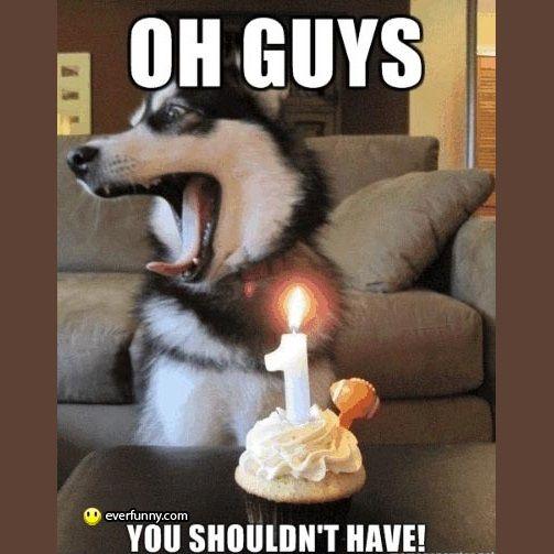 Happy Birthday Dog Quotes ~ Happy birthday dog pictures husky quotes for