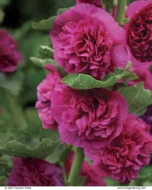 25 Robust Summer Bloomers Summer Blooming Flowers Summer