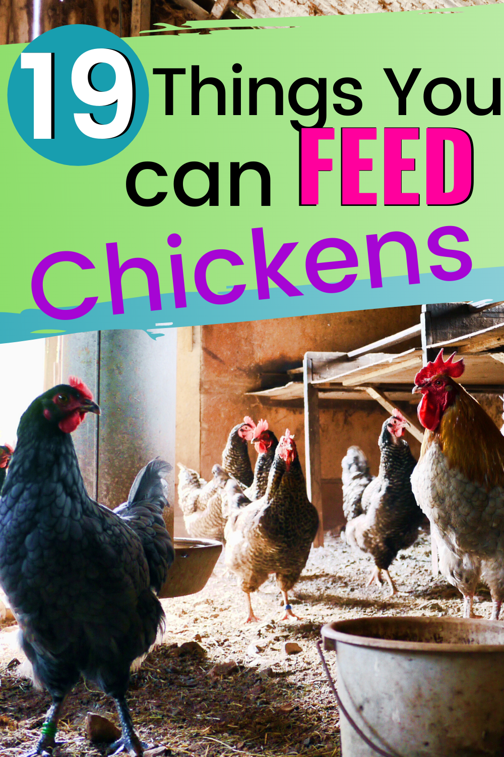 19+ Safe Things You Can Feed Your Chickens » Family ...