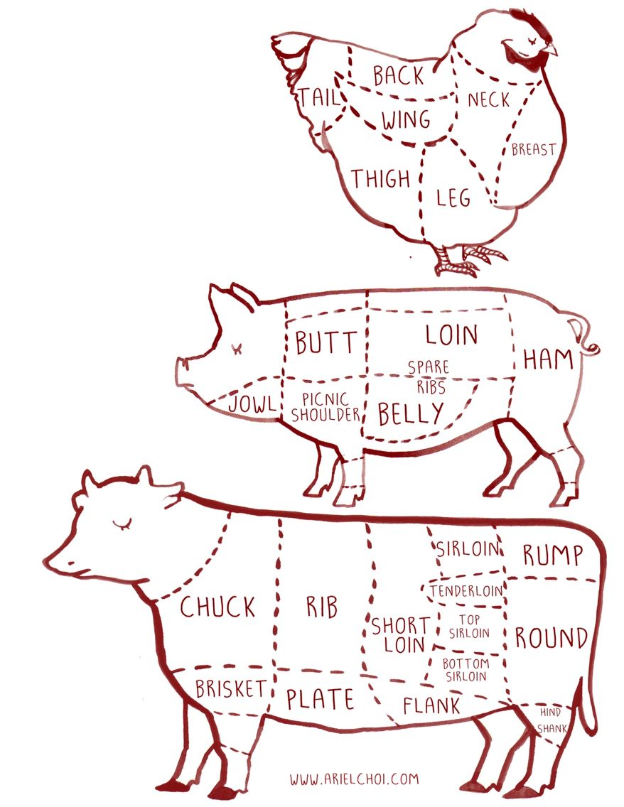 cow pig chicken butcher diagram chart illustration illustration by ariel choi [ 878 x 1136 Pixel ]