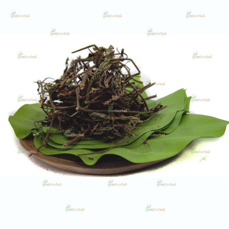 Pin Oleh Ijemherbal Di Rempah Herbal Spices Herbs Stevia Rempah Teh Hijau