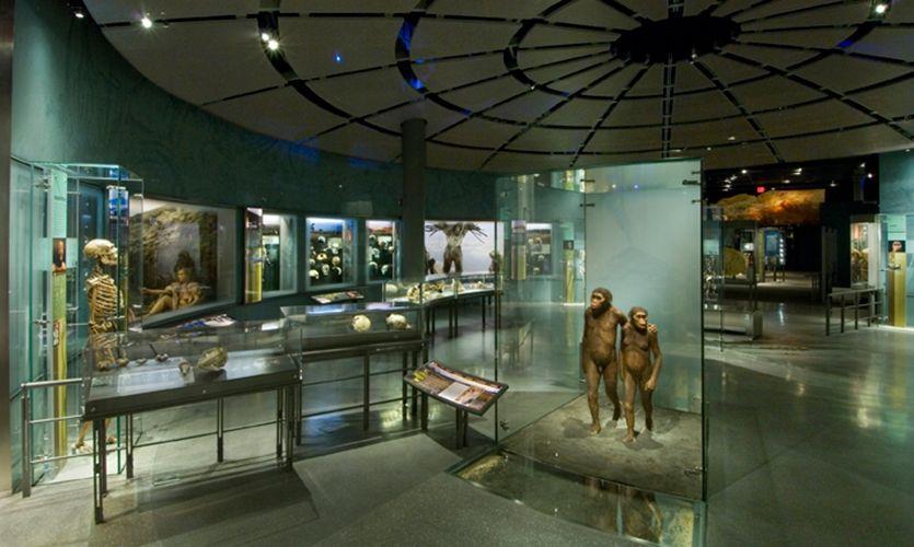 Central Rotunda Hall Of Human Origins American Museum Natural History SEGD