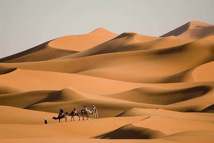 Check These Amazing Deserts And The Cool Things You Can Do There Namib Desert Deserts Of The World Fun Deserts