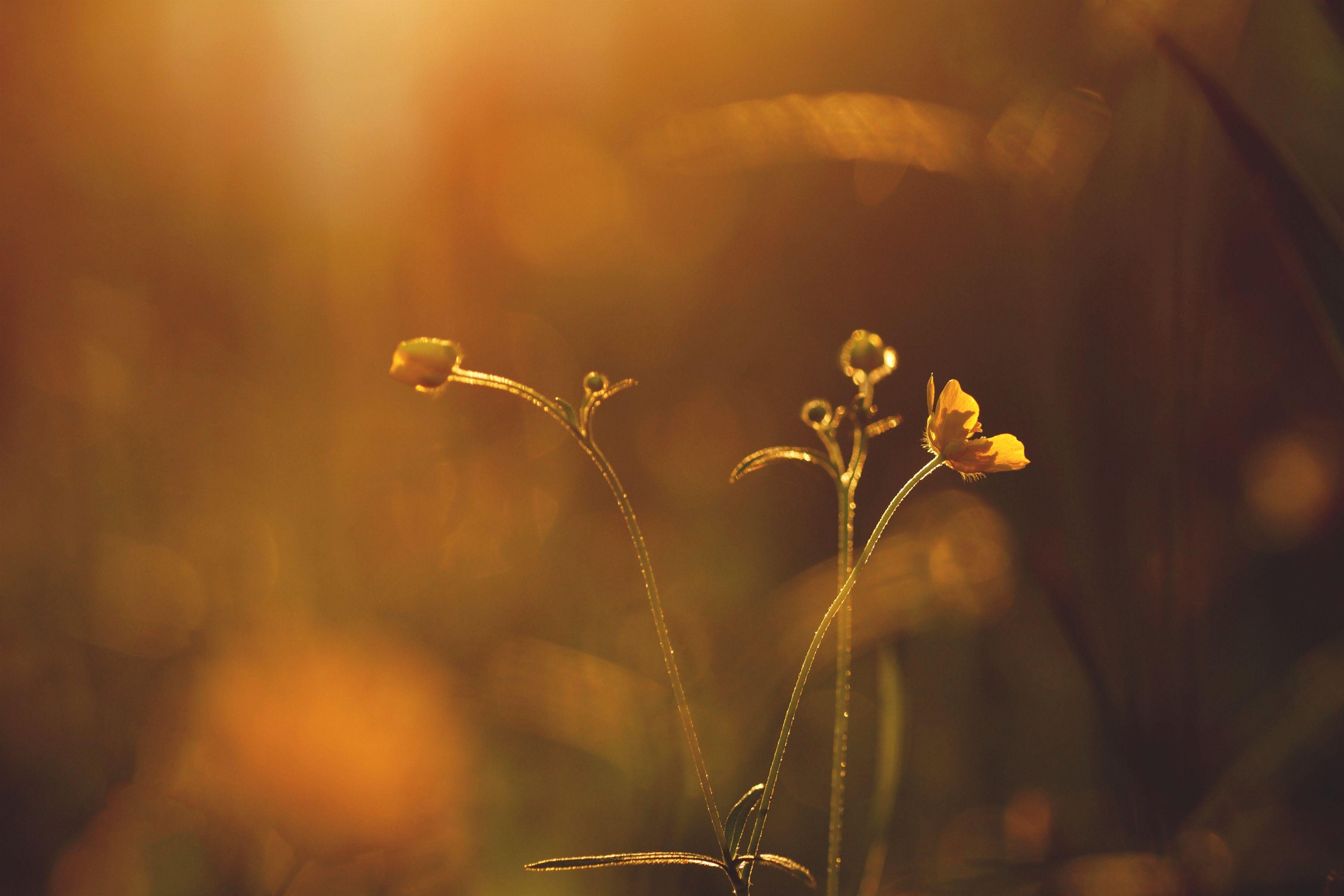 gardening 06790_992_20180822113404_53 age uk peterborough #gardening ...