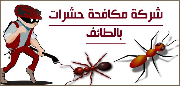 شركة مكافحة الحشرات بالطائف 0598884022 Blog Posts Taif Poster