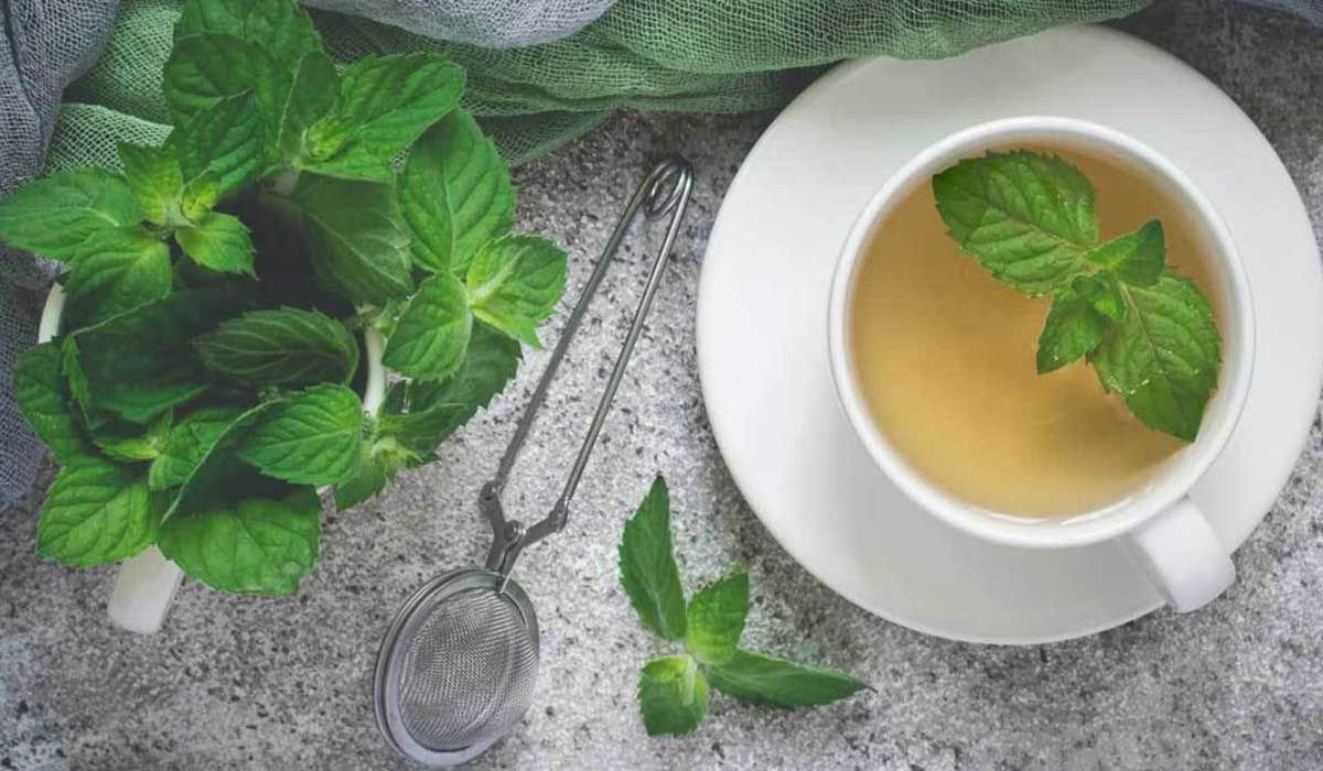 فوائد النعناع للتنحيف Peppermint Tea Benefits Peppermint Tea Echinacea Tea Benefits