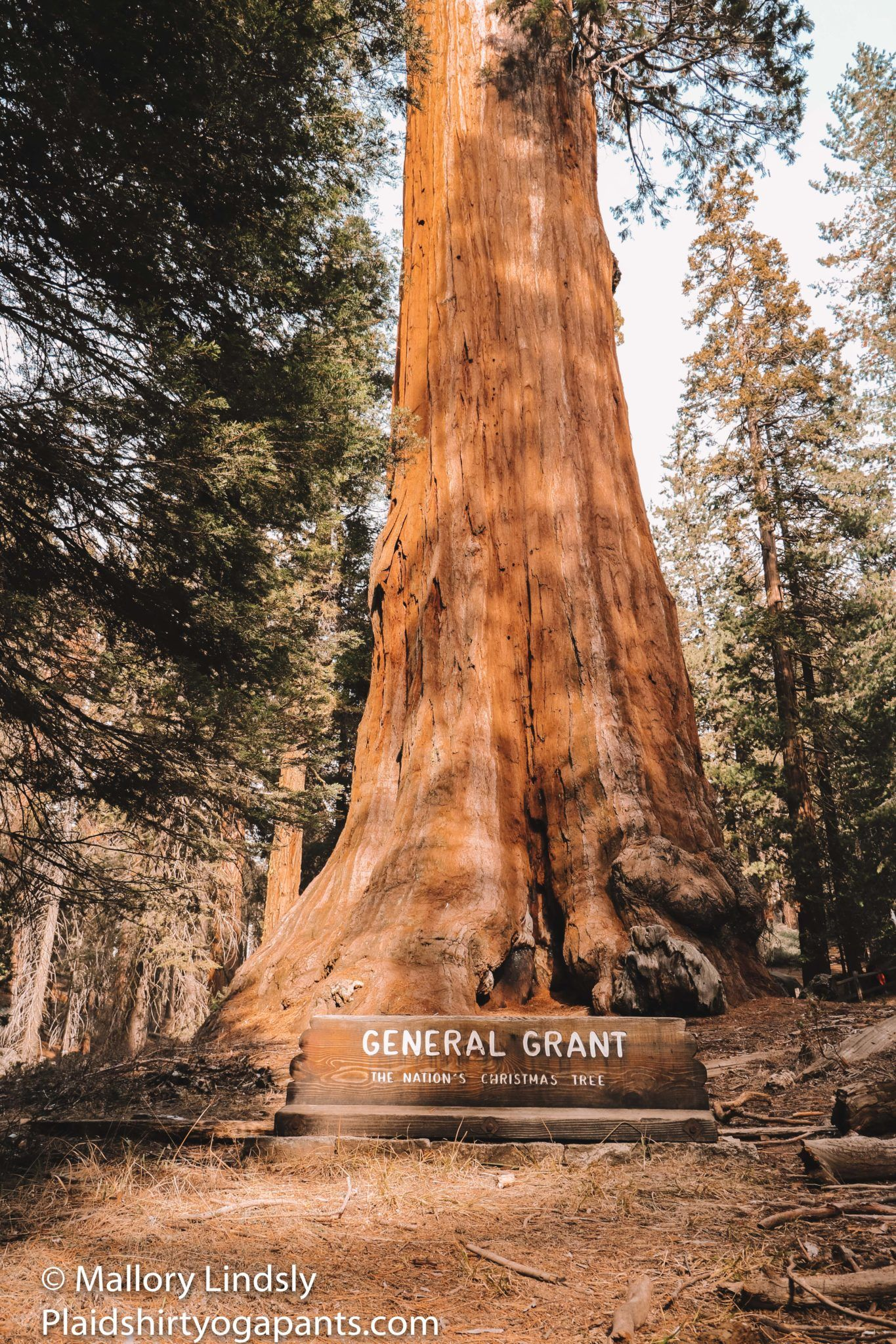 Three Best Accessible Walks in Sequoia and Kings Canyon National