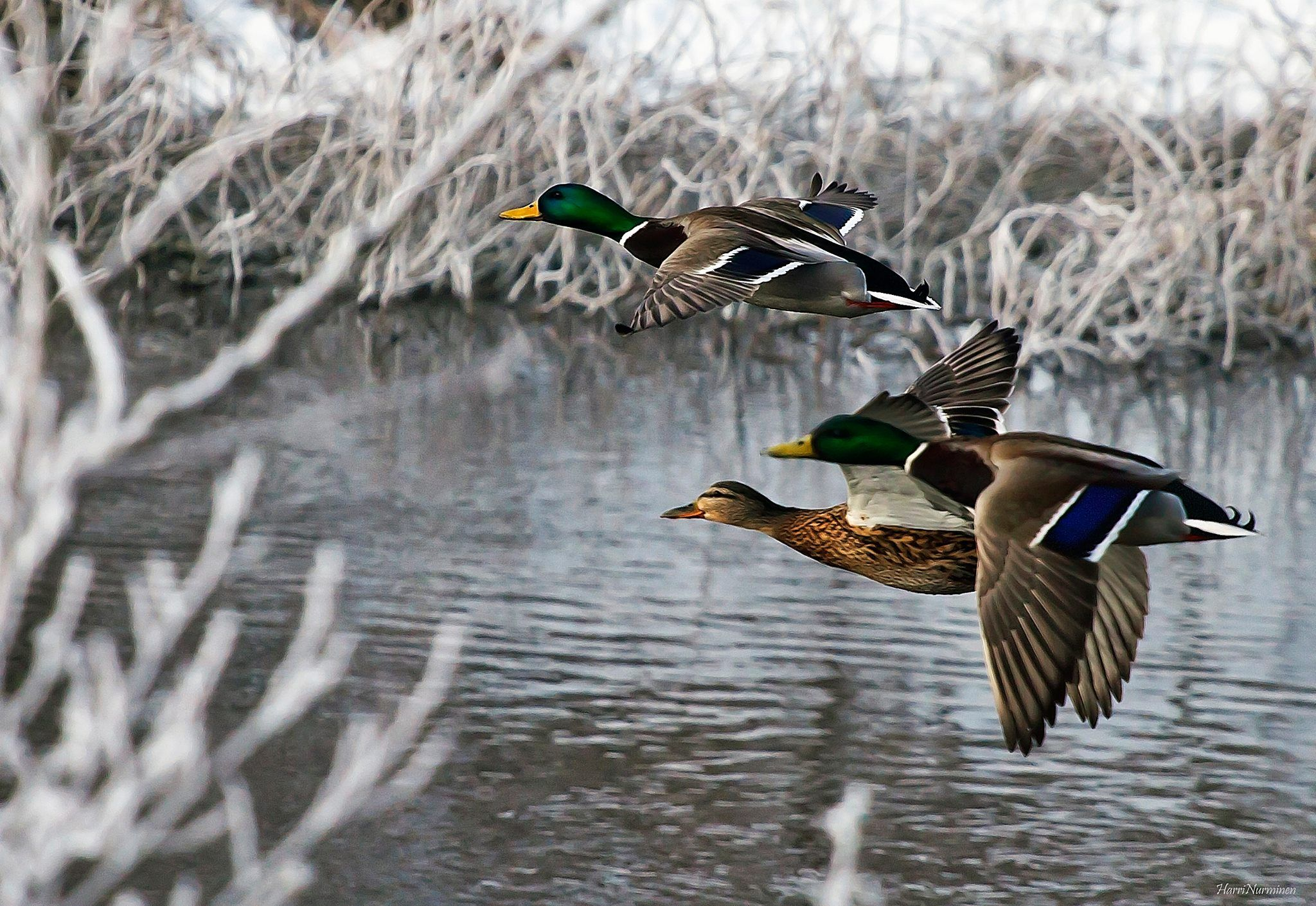 This is why we Duck Hunt | Duck Hunting | Pinterest | Patos, Ganso y ...