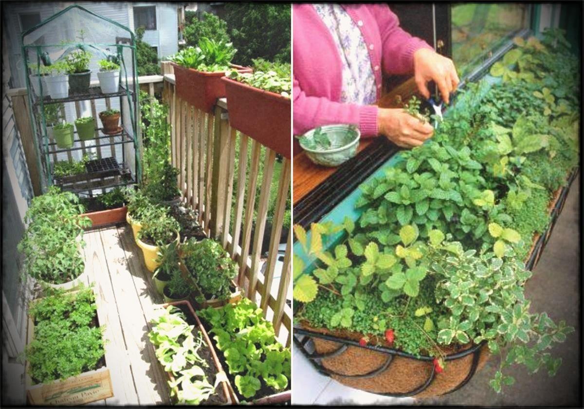vegetable gardens small balcony garden