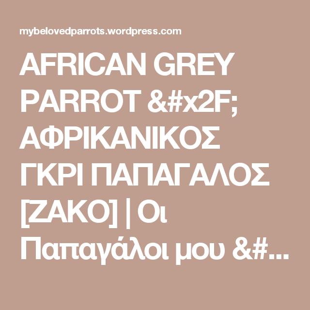 AFRICAN GREY PARROT / ΑΦΡΙΚΑΝΙΚΟΣ ΓΚΡΙ ΠΑΠΑΓΑΛΟΣ [ΖΑΚΟ] | Οι Παπαγάλοι μου / My Parrots