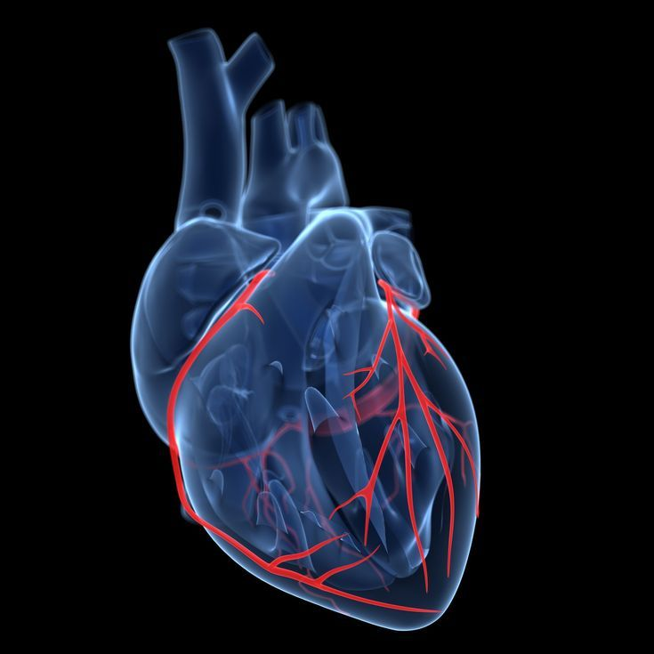 The Anatomy of the Coronary Arteries Helps the Heart Function ...