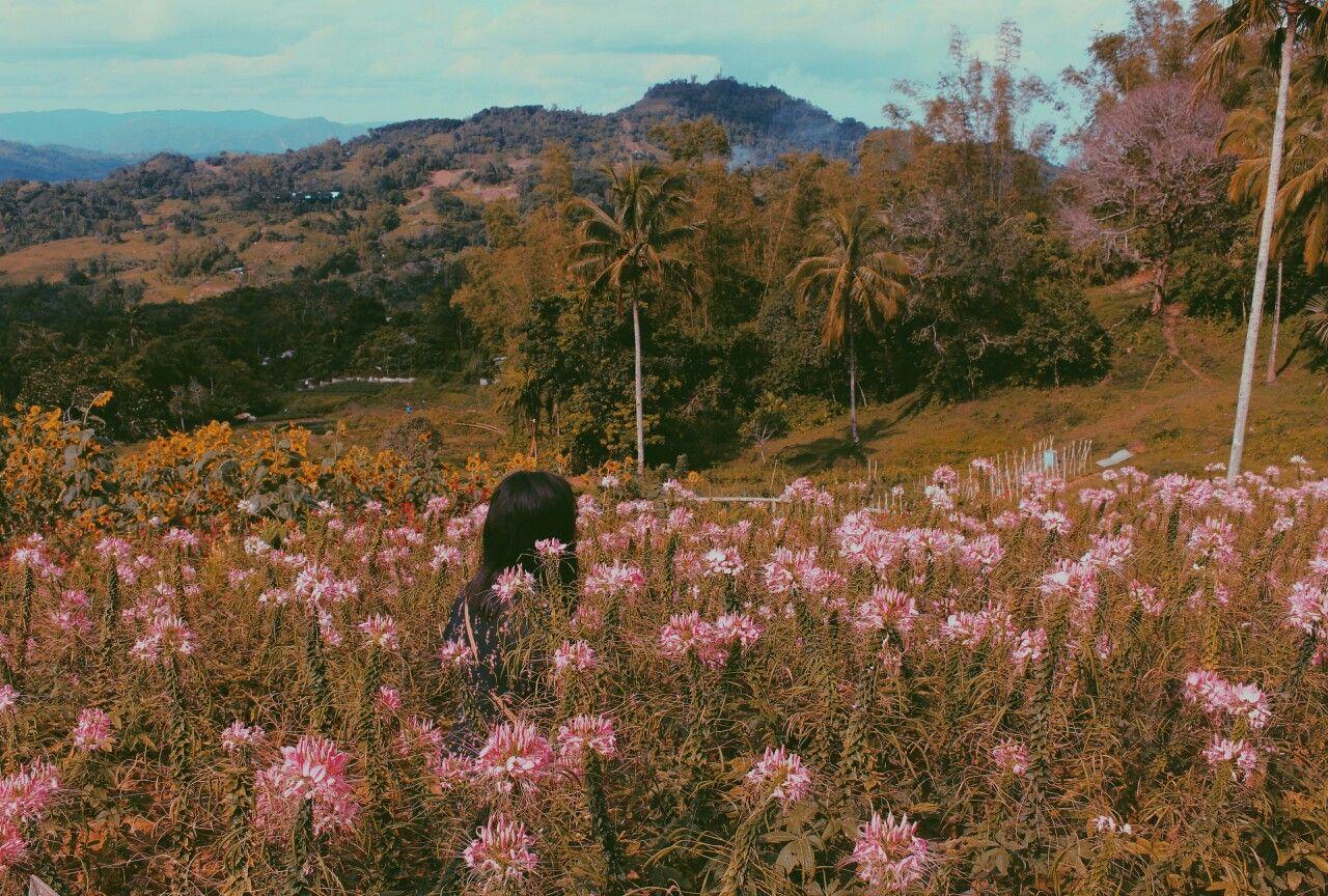Pretty flowers 📍Sirao Flower Garden, Cebu City Cebu city