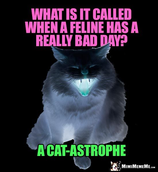 Dark Cat Meme What Is It Called When A Feline Has A Really Bad Day A Cat Astrophe Funny Cat Jokes Funny Cat Memes Cat Jokes