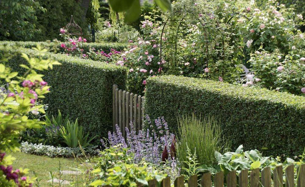 liguster gartenideen garden landscaping garden und plants. Black Bedroom Furniture Sets. Home Design Ideas