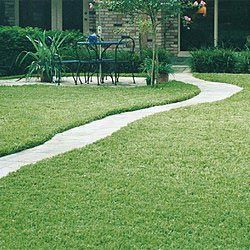 Fall Lawns Alive All Natural Fertilizer Zoysia Grass Lawn