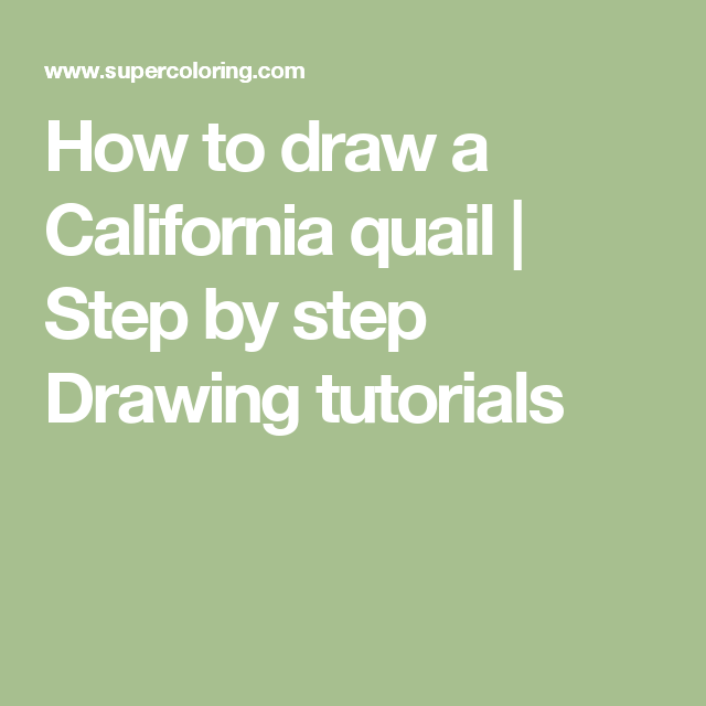 how to draw a california quail step by step drawing tutorials