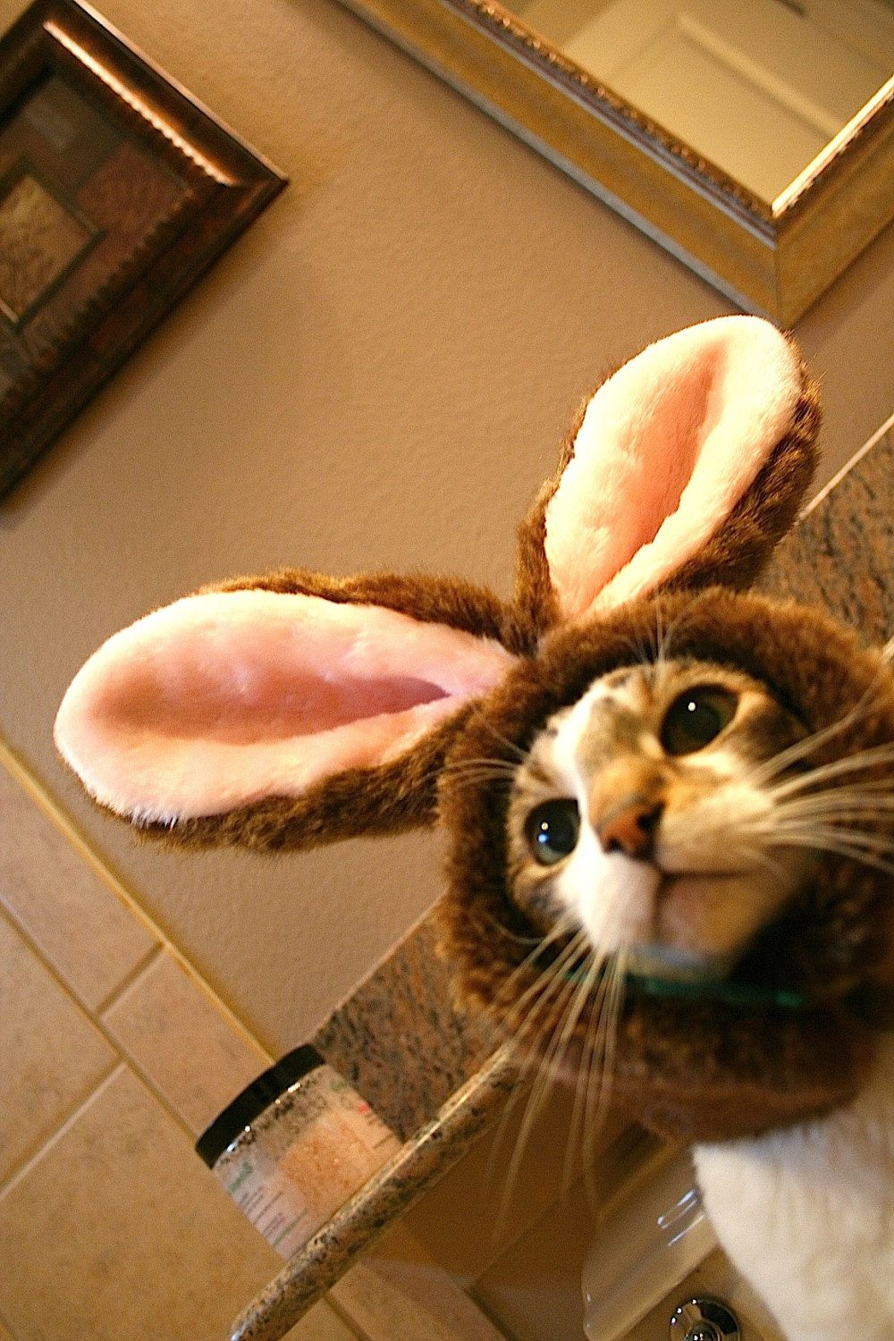 Bunny Hat for Cats via Etsy yeah, Bella would put up with