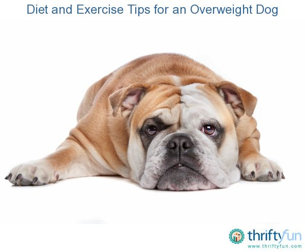 Diet And Exercise Tips For An Overweight Dog Buldogs Love Dogs