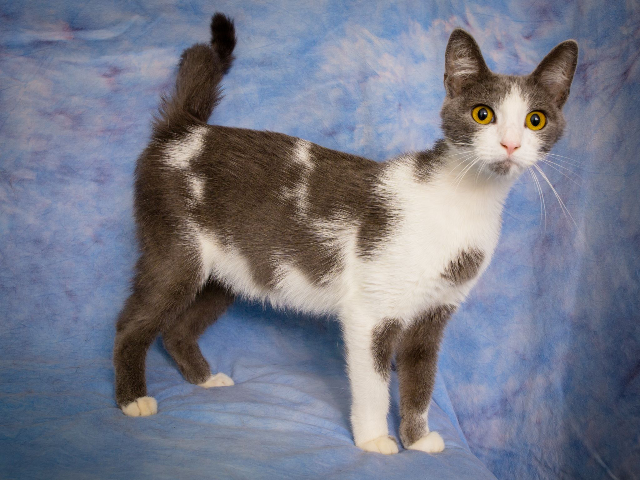 Alice Adopted 09 02 15 Adoption Humane Society Animals