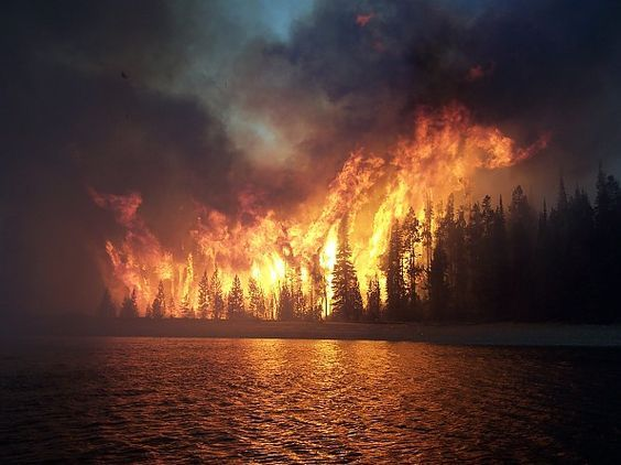 The Strength Of Fire The Taste Of Salmon The Trail Of The Sun And The Life That Never Goes Away They Speak To Me Pictures Fire Forest Fire